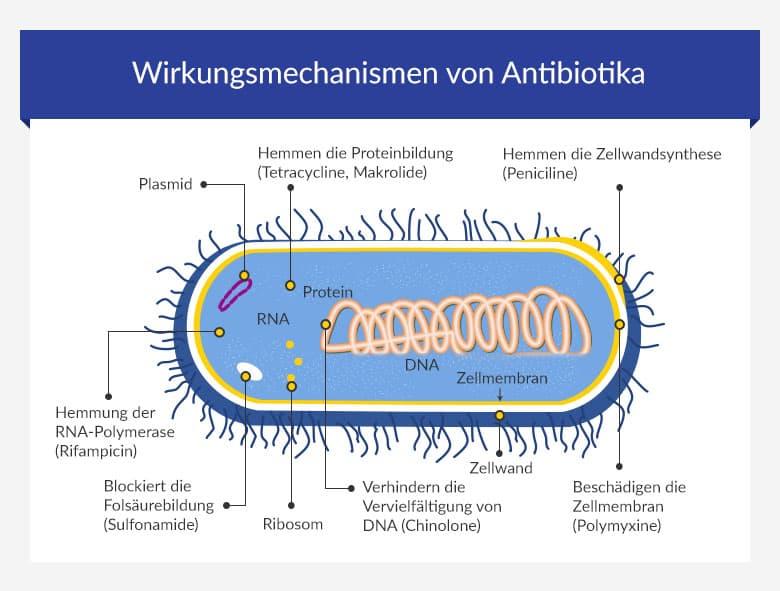 Nuvaring und antibiotika