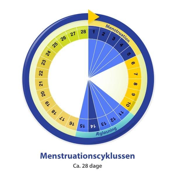 Beregn menstruation