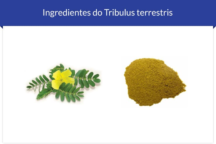 Ingrediente do Tribulus Terrestris